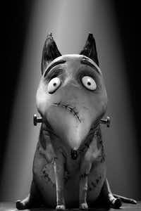 Sparky gets a reprieve from death in the stop-motion animated Frankenweenie.Disney Enterprises
