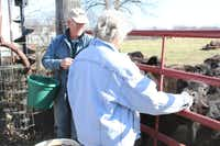 Nancie and Shorty Brunk feed sugar cubes to the cows approaching the gate on their ranchette in Little Elm, where they have lived since 1993. The Brunks are now looking to sell their home and property because of the growth of urban sprawl in and around the area.For the DRC/Madison Wilson