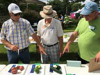 "<p><span style=""font-size: 1em; background-color: transparent;"">Master Gardeners decide on placings among the top vegetables at last year's Denton County Fruit, Vegetable, Herb and Flower Show at the Denton County Historical Park.</span></p>Courtesy photo"