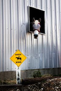 "One of Shannon Flanagan's horses sticks its head through a window of its stable. A sign reads ""Horse Xing"" in front of the stable.For the DRC"