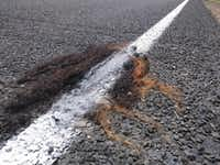 A wig or hair weave got striped with thermoplastic along with the street. Streets are usually striped by Texas Department of Transportation.