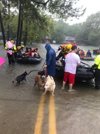 Rescue teams from Denton transported dozens of southeast Houston residents out of their flooded neighborhood after Hurricane Harvey. Denton Fire Department Capt. Brian Cox said the team also helped transport more than 160 dogs and 80 cats to safety.Courtesy