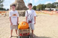 Twins Drew and Jacob Creane, 12, from Justin choose the largest pumpkin they can find at the Flower Mound Pumpkin Patch. 10242014xBRIEFING