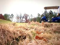 Feral hogs are to blame for damage to the rough along the fairway of hole No. 2 at Timberlinks Golf Club in Denton.NBC5