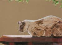 """""""Sun Spot Sweetie,"""" a colored pencil drawing by Roxanne Musick, is part of the Visual Arts Society of Texas' 25th annual Members Exhibition.Courtesy photo - Roxanne Musick"""
