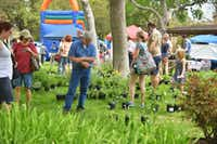 Visitors check out plants for sale during the Redbud Festival on Saturday in Denton's Quakertown Park.David Minton - DRC