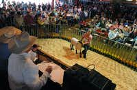 Harley Bridges of Ponder shows her Champion Fine Wool sheep at the Denton County Livestock Association Youth Fair Livestock Auction, Saturday, March 30, 2013, at the North Texas State Fair Grounds in Denton, TX.David Minton - DRC