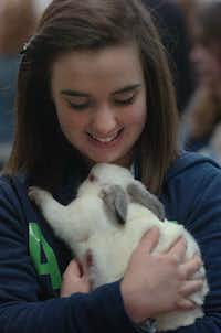 Fourteen-year-old McKenzie Cloud of Lewisville holds her rabbit Big 'un at the Denton County Livestock Association Youth Fair at the North Texas Fairgrounds Tuesday March 26, 2013, in Denton.Al Key - DRC