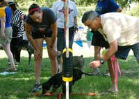 Kari Shields helps Mark Greogory get Maggie to jump through a hoop on the agility course at Dog Days of Denton on June 2, 2012, at Quakertown Park.DRC file photo